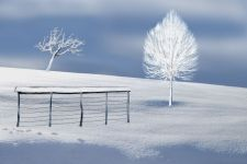 b_250_150_16777215_00_images_phocagallery_2021_Fotoskupina_Dario_EFIAP_thumbs_phoca_thumb_l_frozen_snowr.jpg