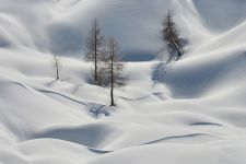 b_250_150_16777215_00_images_stories_fotoskupina_2020_Danilo_lesjak_Larches_in_the_snow2.jpg